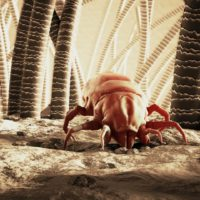 Close up 3D image of a dust mite